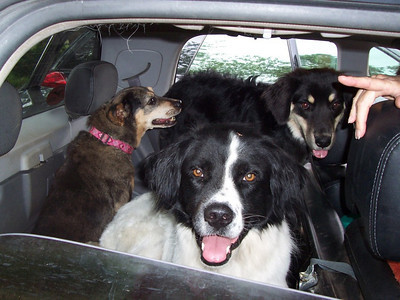 All three dogs in the back of the Baja: Jester Dixon and Tennessee.