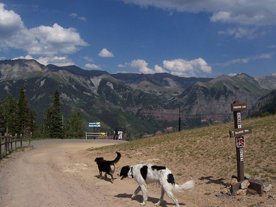 Jester and Dixon at the top of the mountain in Telluride after riding up the gondola.