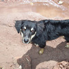Dixon is a happy, wet, sandy dog after playing in the San Juan River near Telluride.