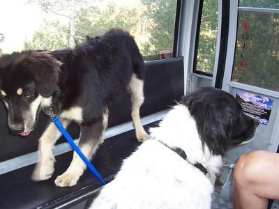 Jester and Dixon on the gondola at Telluride.