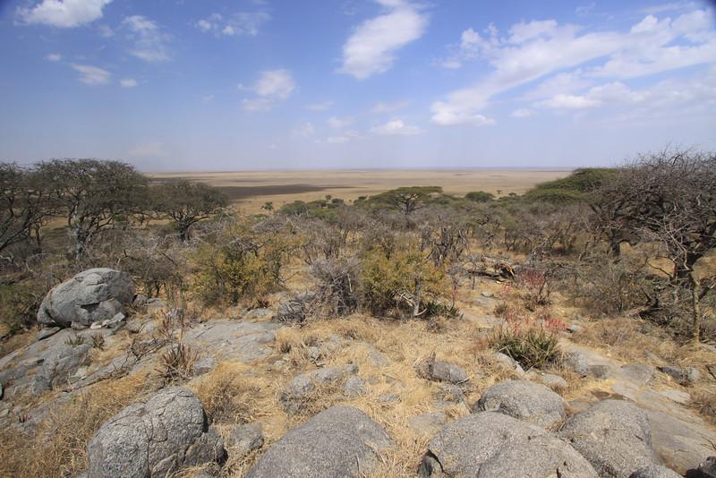 Serengeti Viewpoint