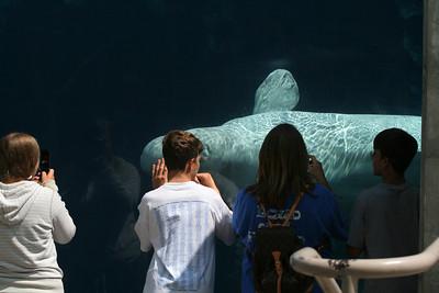 Mystic Aquarium, Mystic, CT.