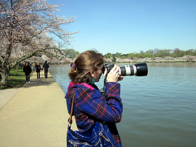 Cherry Blossom Festival, Washington, D.C.