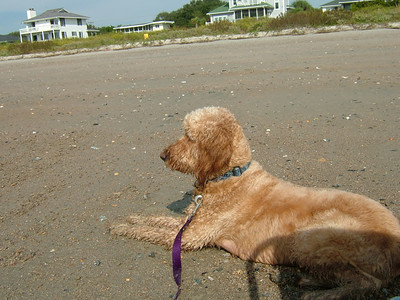 Abby enjoying the views on the beach