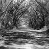 road to Botany Bay plantation WMA