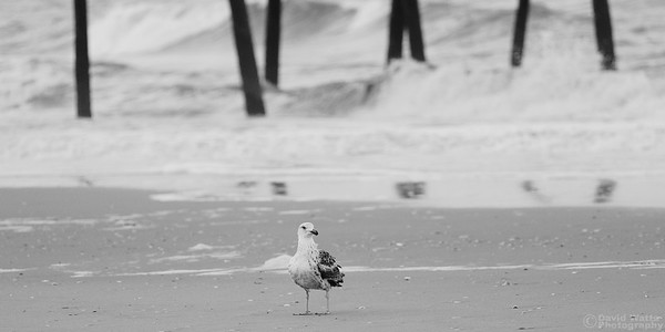 Gull Strolling the Emerald Island Shore