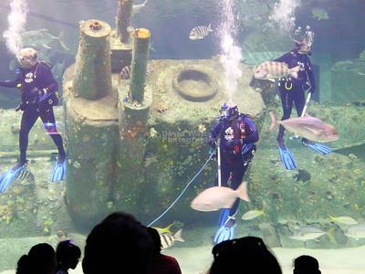 Divers at the N.C. Aqarium