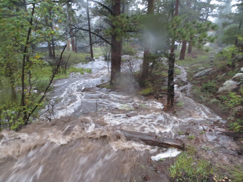 Thu, 09/12 7:01am: On Wednesday night, it started raining as hard and long as I've ever known and this is the little creek on the SW side of  our property early Thursday morning.  Decades ago, it flowed every spring, but in recent time, it is usually dry.