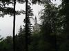 Neuschwanstein Castle in the hills, Germany.