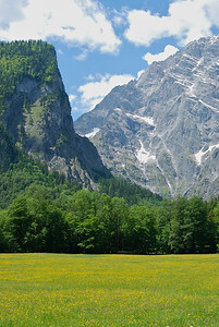 Fields of yellow flowers give way to soaring mountains in Berchtesgaden