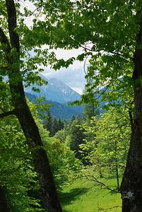 The mountain forest around Linderhof