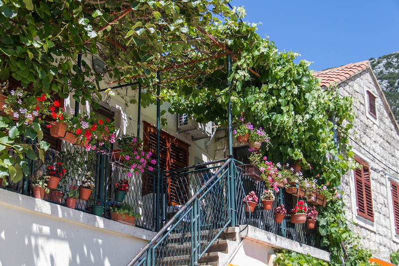 Most of the houses had these balconys with grape vines for shade.