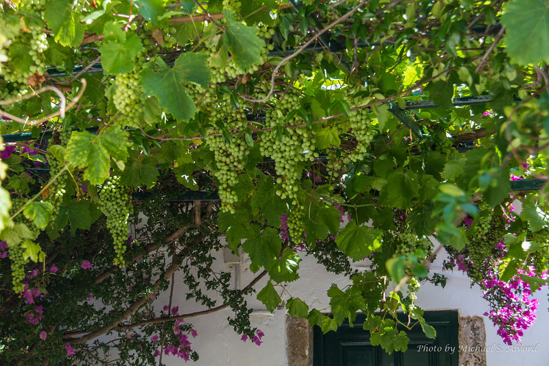 Every one grows grapes for wine and the vines and leafs provide shade.
