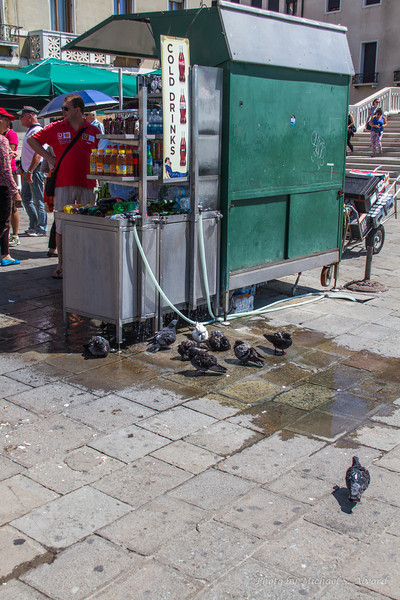It was so hot that even the pigions needed water.
