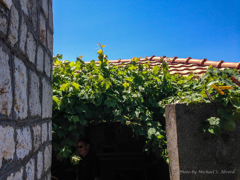 Almost every home had grape vines growing on them so they could make wine.
