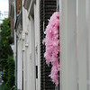 A feather boa tied to an electrical conduit on our street. It must have been some kind of party!
