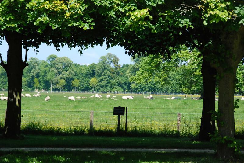 They still raise sheep at Marie Antoinette's farm.