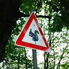 The squirrel crossing sign.