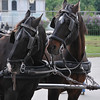 Taken from our horse carriage ride ... I think these two liked our horses.