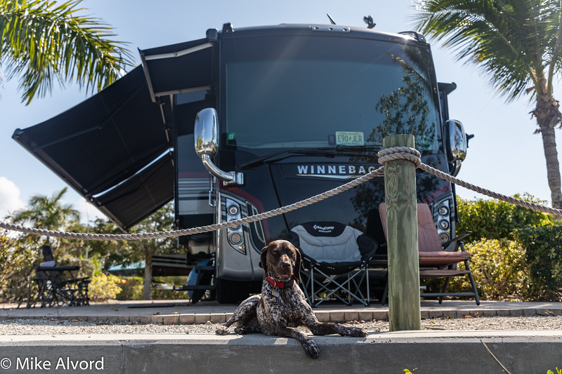 Abby protecting the RV.