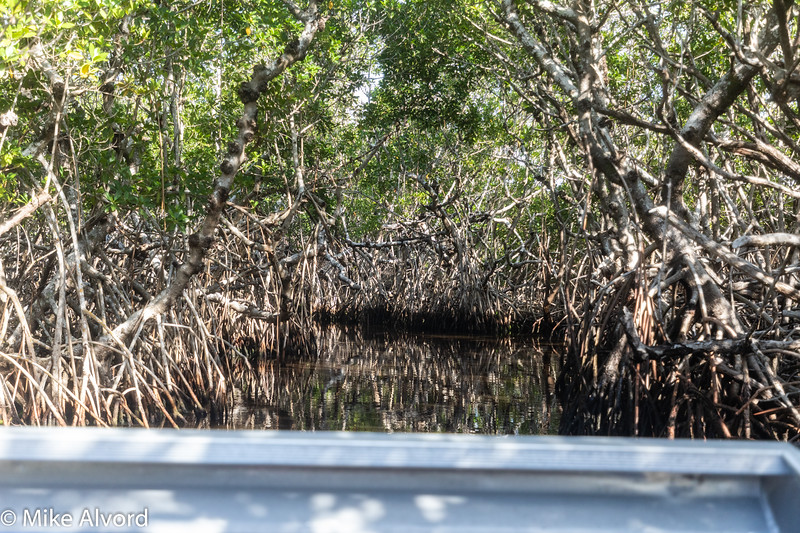 In the middle of the mangroves.