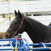 an interested observed down in a pen near the chutes