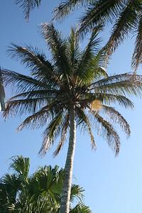 FL PICS 088