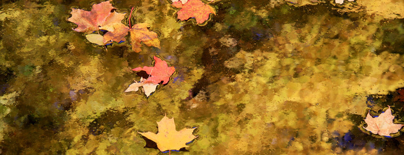 Fall leaves in Wisc 09