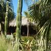 Hotel grounds, Jardin del Eden