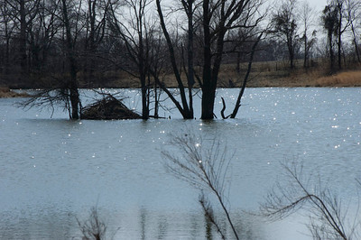 Beaver dam on Far Out Pond
