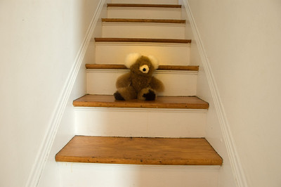 Jackson stationed his Alpaca Bear to guard the steps until his return.