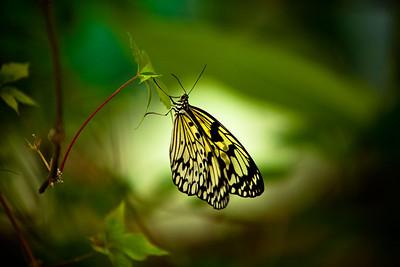 Butterfly Center in the Nikolaev Zoo. Ukraine.