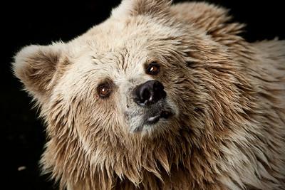 A somewhat sad looking bear at the Nikolaev Zoo.