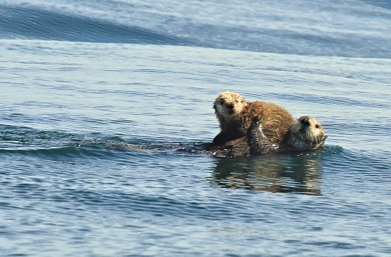 Mama otter and her baby