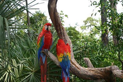 Bravard Zoo