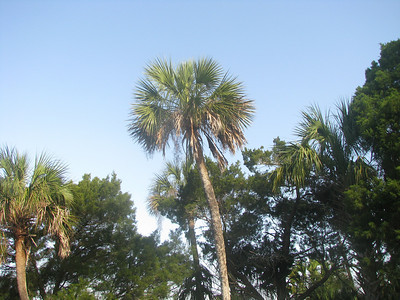 Florida 2008 Highlights