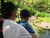 Looking at flamingoes.