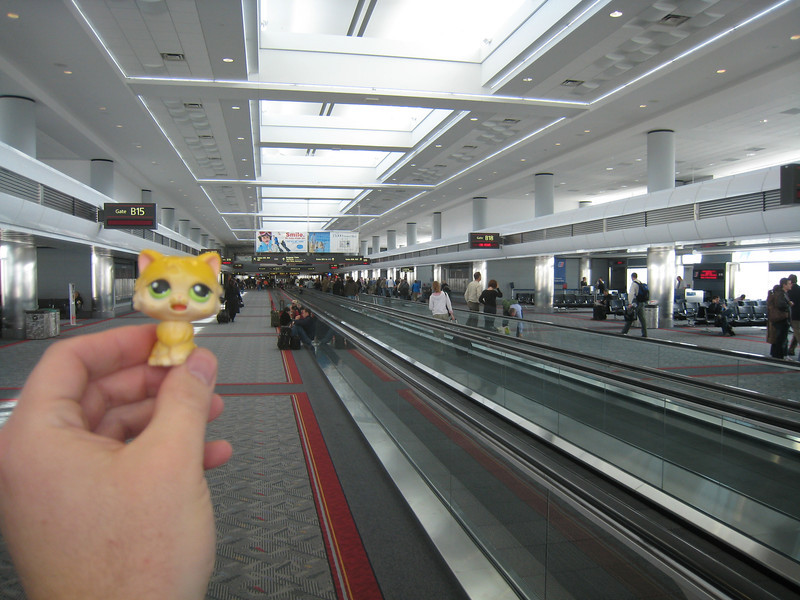 Gold Kitty goes to the airport and waits for her plane.