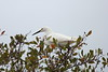 Snowy Egret @ Sanibel Lighthouse