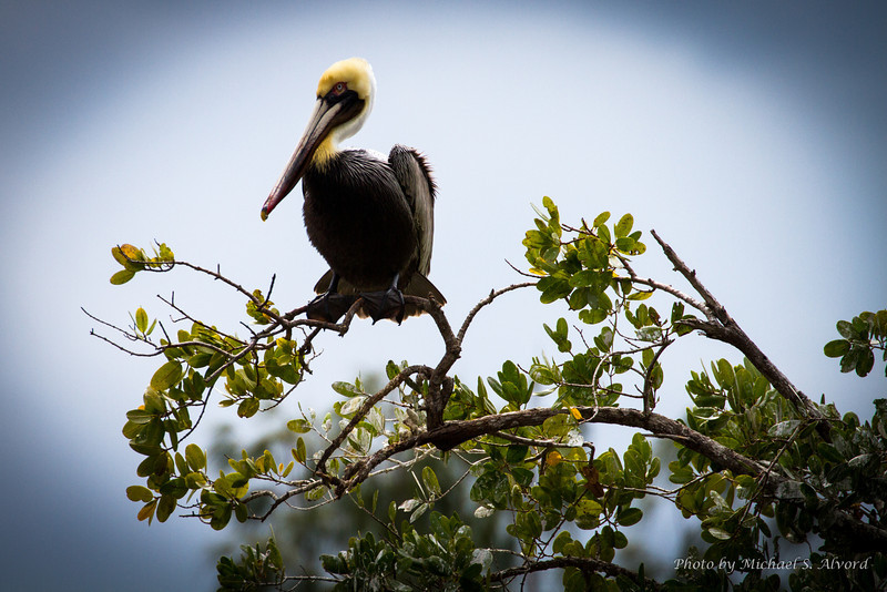 There are birds all over through the canal, this happens to be one sitting on a tree outside the lock.