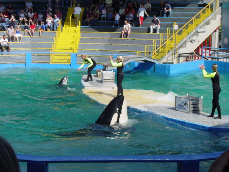 every see an Orca beg?