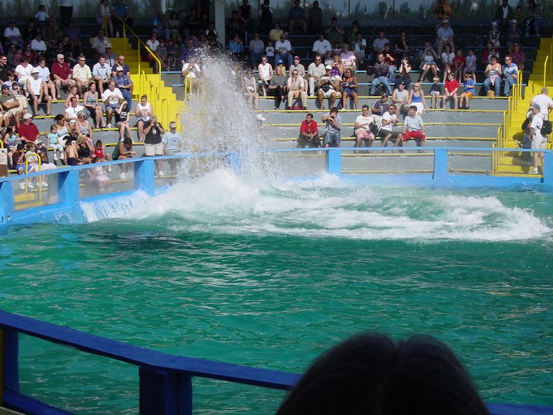 Lolita makes a big splash when she jumps in the water