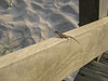 Skink Catching the Rays