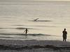 Nokomis Beach Pelican Fishing