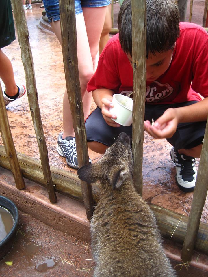 Ian feeding the Kangaroos