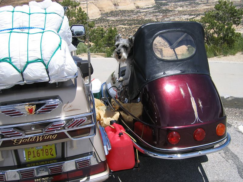 This dog is going to a sidecar rally in Oregon.