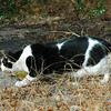 This is Abby, one of the cats who stay at Foxfire, as she stalks some birds that were feeding on the ground.