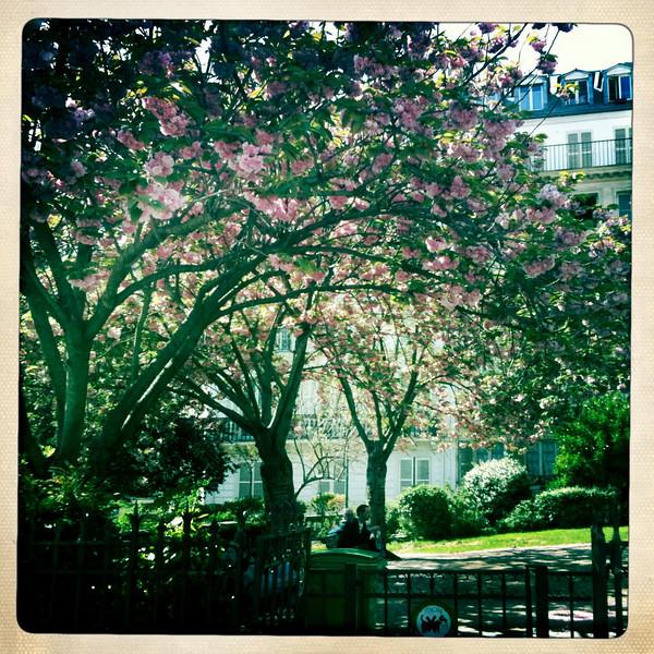 Flowers in bloom, Paris in the spring!