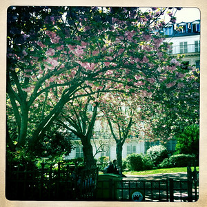 Flowers in bloom, Paris in the spring!