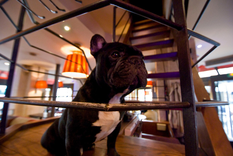 The Frenchie in the bar we went to after ditching the line at the Museum.